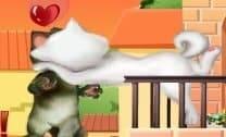 Beijos Tom Cat