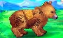 Cuidar do Urso Abandonado