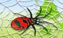 Defender a teia de aranha