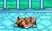 Tigre Bebê
